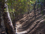 Picture of / about 'Wirrabara Forestry Reserve' South Australia - Wirrabara Forestry Reserve