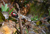 Picture relating to Black Mountain Reserve - titled 'Red, orange, black and iridescent green bug'