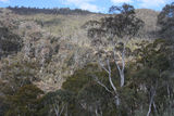 Picture of / about 'Blue Creek Mine' New South Wales - Blue Creek Valley, near Blue Creek Coppermine.