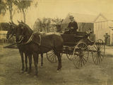Picture relating to Charters Towers - titled 'Doctor Brown with his beautiful horses and phaeton, Charters Towers, ca. 1890'