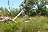 Picture relating to Thrushton National Park - titled 'Thrushton National Park'
