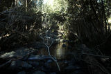 Picture of / about 'Caparra Creek' New South Wales - Caparra Creek