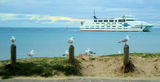 Picture relating to Sorrento - titled 'Sorrento Queenscliff Ferry '