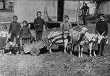 Picture relating to Queensland - titled 'Group of boys with a goat cart, possibly at Winton, 1900-1910'