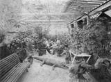 Picture relating to Ayr - titled 'Crocodile shares the beer garden of the Hotel Delta, Ayr, ca. 1912'