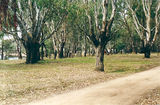 Picture relating to Yarrawonga - titled 'Yarrawonga Regional Park: Chinamans Beach'