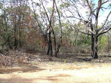 Picture relating to Grampians National Park - titled 'After the fires...'