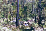 Picture relating to Mount Strathbogie - titled 'Mount Strathbogie: Kangaroo Creek bush camp'