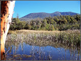 Picture relating to Tidbinbilla Nature Reserve - titled 'Tidbinbilla Nature Reserve - bordering - Namadgi National Park'