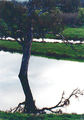 Picture relating to Jingellic - titled 'Reflections on Jingellic Dam NSW'