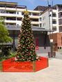 Picture relating to Kogarah - titled 'Christmas in Kogarah'