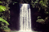 Picture relating to Millaa Millaa - titled 'Millaa Millaa Falls'