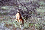 Picture relating to South Flinders Ranges - titled 'South Flinders Ranges'