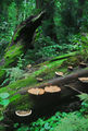 Picture relating to Dorrigo National Park - titled 'Fungi in the forest'