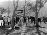 Picture relating to Inglewood - titled 'Preparing for a polo match with Warwick at Inglewood racecourse, ca. 1909'