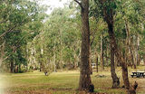 Picture relating to State Forest - titled 'Won Wron State Forest; White Womens Waterhole Camp Ground'