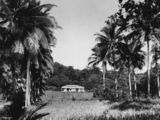 Picture relating to Dunk Island - titled 'Residence of E. J. Banfield on Dunk Island, 1935'