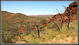 Picture relating to Gammon Ranges National Park - titled 'Gammon Ranges National Park'