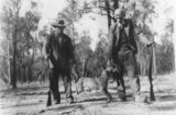 Picture relating to Perthton - titled 'Hunters posing with a dingo carcas in Perthton, 1940'