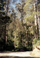 Picture relating to Otway National Park - titled 'Otway National Park'