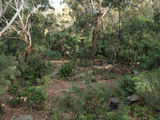 Picture of / about 'Carss Park' New South Wales - Carss Park 30