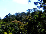 Picture relating to Queensland - titled 'Bunya Mountains National Park'