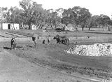 Picture relating to Acton - titled 'Australian Institute of Anatomy with horse teams and scoops excavating the foundations, McCoy Circle, Acton.'