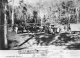 Picture relating to Mount Morgan - titled 'Christmas greeting card depicting a bush scene, Mt. Morgan, ca. 1892'