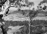 Picture relating to Braddon - titled 'Braddon and Civic Centre from Mt Ainslie. Ainslie Hotel in the centre. Black Mountain at the rear.'