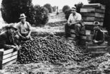 Picture relating to Mount Tamborine - titled 'Curtis brothers of Mount Tamborine with a pile of apples?, ca. 1923'