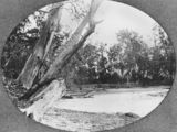 Picture relating to Currumbin Creek - titled 'Currumbin Creek, ca. 1915'