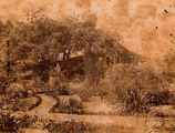 Picture relating to Mackay - titled 'Colonial English style garden at The Nyth outside Mackay about 1875'