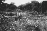Picture relating to Thursday Island - titled 'Traditional garden plot on Thurdsay Island, ca. 1934'
