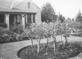 Picture relating to Forrest - titled 'House and garden built for J A Carrodus, Secretary of Dept. of Interior, 59 Dominion Circuit, Forrest. Noted for its rose garden.'