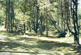 Picture relating to Acheron Way - titled 'Acheron Way, Feiglin bush camp ground, Marysville State Forest'