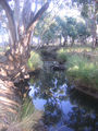 Picture relating to Billabong Creek - titled 'Billabong Creek'