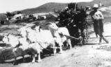 Picture relating to Blinman North - titled 'Blinman North - Team of goats gathering wood'