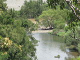 Picture relating to Macleay River - titled 'Macleay River/5Day Creek'