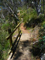 Picture relating to Black Mountain Reserve - titled 'Black Mountain Reserve walking track'