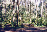 Picture relating to Kinglake National Park - titled 'Kinglake National Park; The Gums Camp Cround'