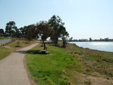 Picture relating to Wagga Wagga - titled 'Lake Albert Foreshore'