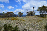 Picture relating to Mount Franklin - titled 'Mount Franklin Trig on Summit'