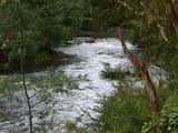 Picture relating to Yarra River - titled 'The Yarra near Warburton'