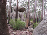 Picture relating to Gulaga National Park - titled 'Gulaga National Park'