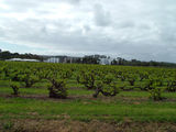 Picture relating to McLaren Flat - titled 'McLaren Flat Vineyards'
