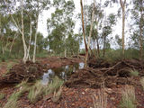 Picture relating to Newman - titled 'Newman ~ Homestead Creek.'