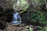 Picture of / about 'Strickland Falls' Tasmania - Strickland Falls