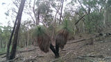 Picture relating to Ellerslie Nature Reserve - titled 'Grass Tree within Ellerslie Nature Reserve'