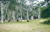 Picture relating to Langi Ghiran State Park - titled 'Langi Ghiran State Park; camp ground'