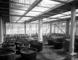 Picture relating to Black Mountain - titled 'Interior of Insectarium, CSIR Laboratories, Clunies Ross Street, Black Mountain.'
